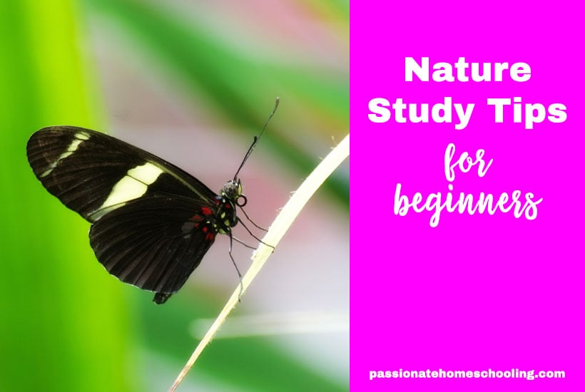 Nature Study Tips For Beginners