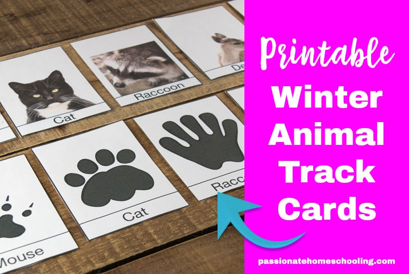 Free Winter Animal Tracks Cards