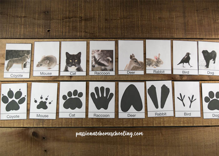 picture about Animal Tracks Printable called No cost Printable Wintertime Animal Songs Identity