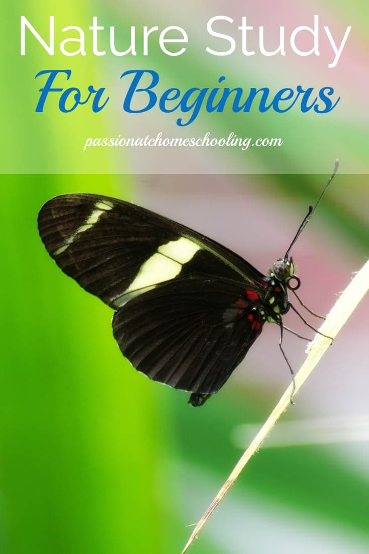 Nature Study For Beginners. 5 Tips to make nature study a fun and enjoyable activity in your homeschool. www.passionatehomeschooling.com