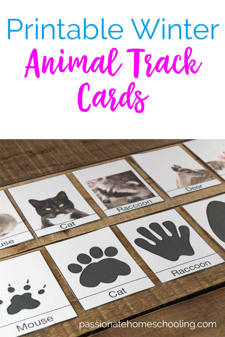 picture about Printable Animal Tracks identify Free of charge Printable Winter season Animal Tunes Id