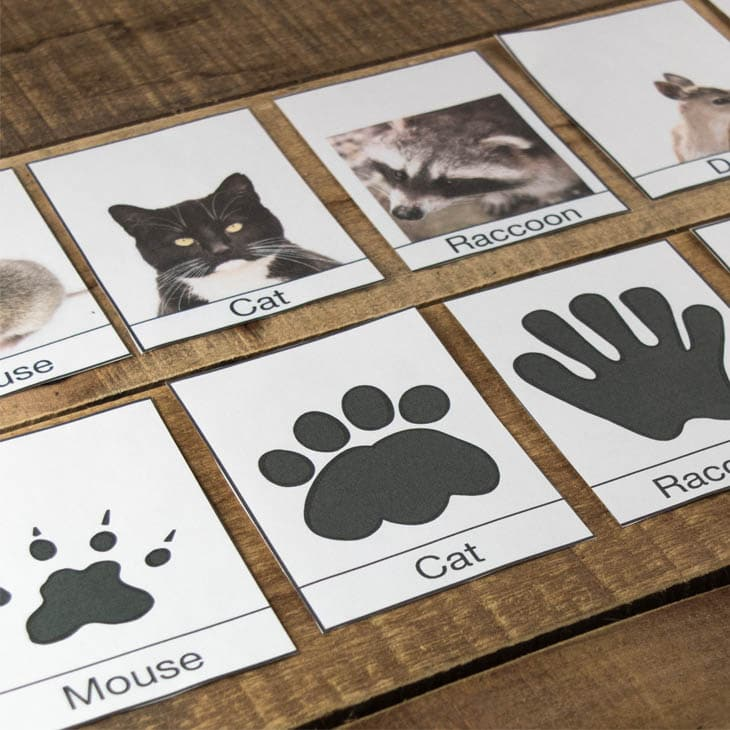 image about Printable Animal Tracks identify Free of charge Printable Wintertime Animal Songs Id